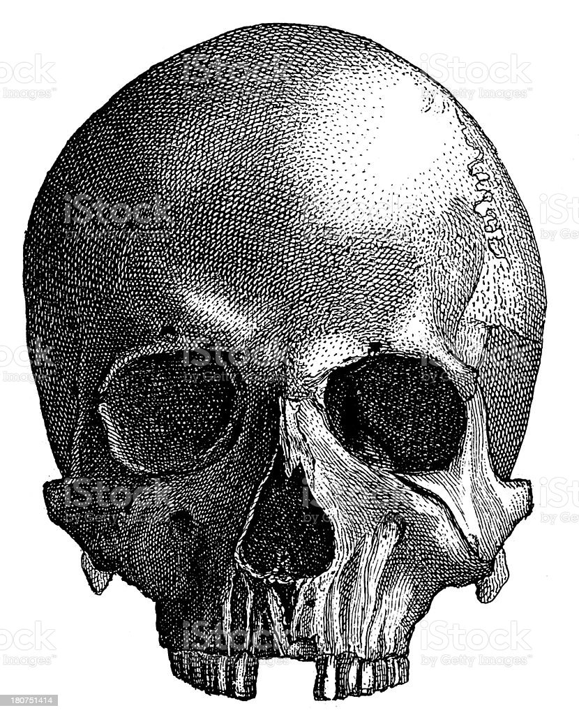 Prehistoric human skull made from an antique wood engraving royalty-free prehistoric human skull made from an antique wood engraving stock vector art & more images of 19th century