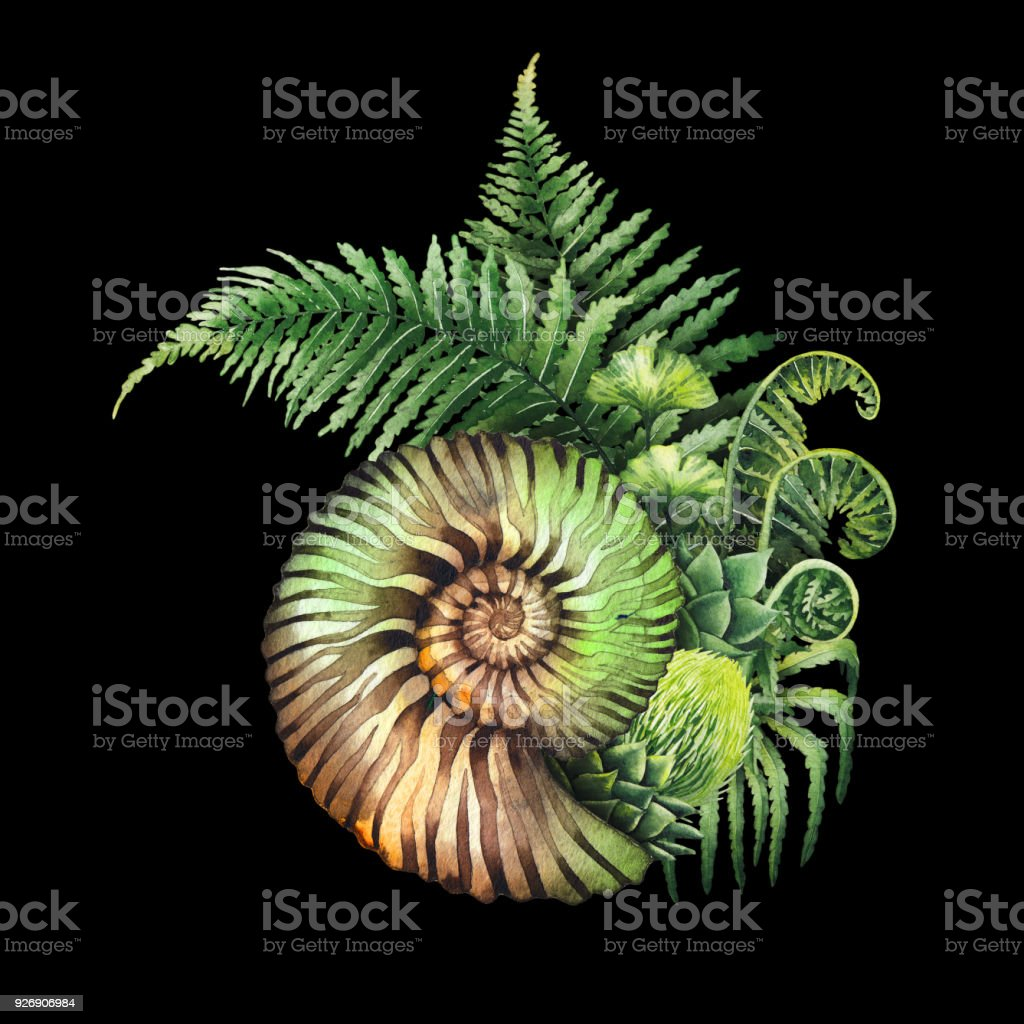 prehistoric watercolor seashell and fern branches stock vector art