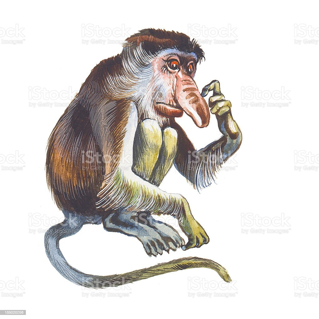Proboscis Monkey vector art illustration