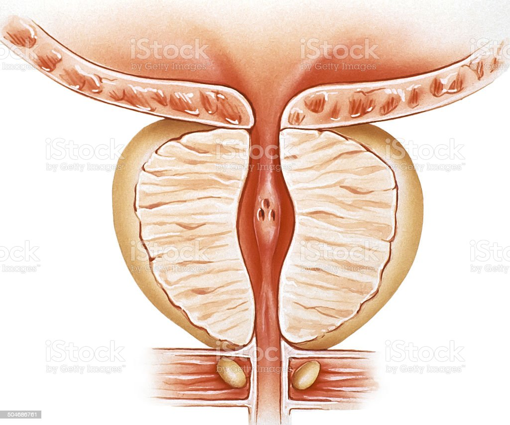 prostate normal