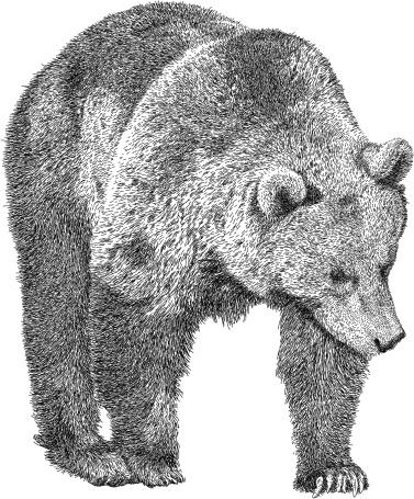 Prowling Bear