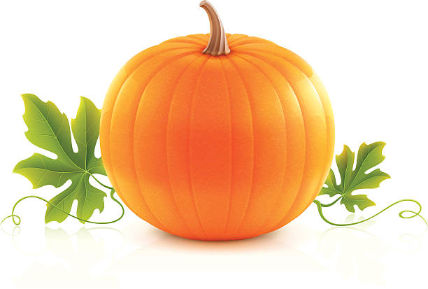 Pumpkin vector art illustration