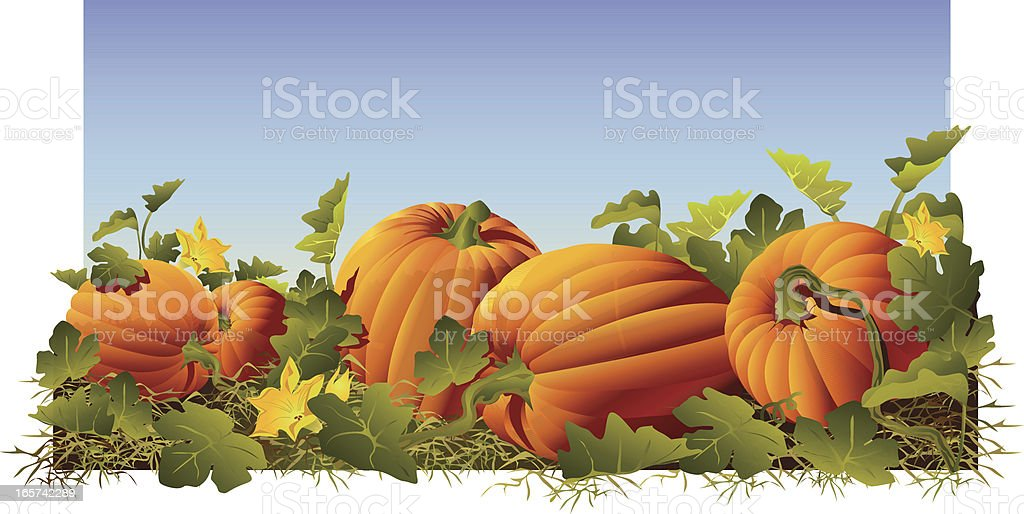 royalty free pumpkin patch clip art  vector images halloween pumpkin clipart black and white halloween pumpkin clip art images