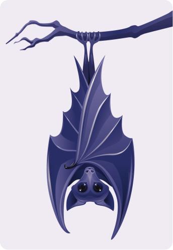 Purple bat