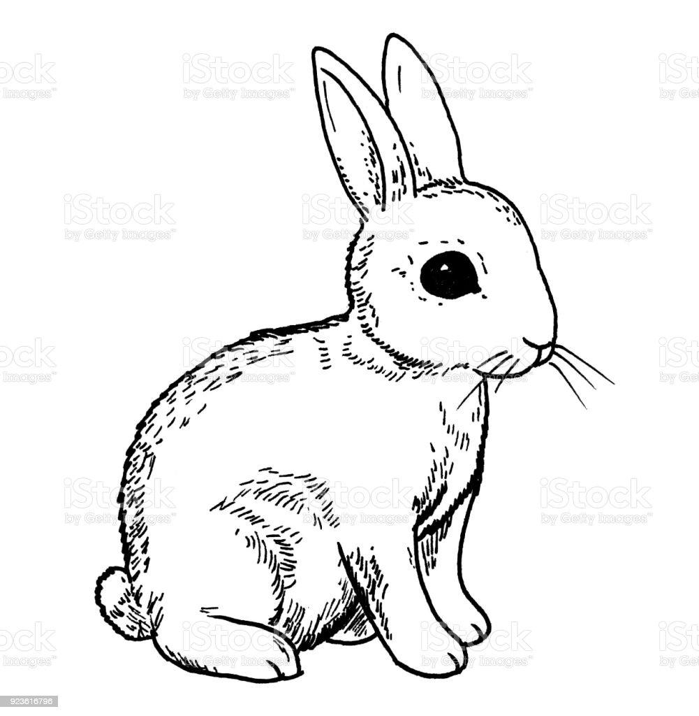 Kaninchen ostern hase hand zeichnen abbildung stock vektor art und mehr bilder von bleistift - Hase zeichnen ...