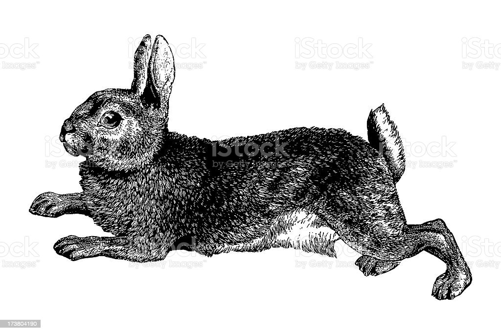 Rabbit vector art illustration