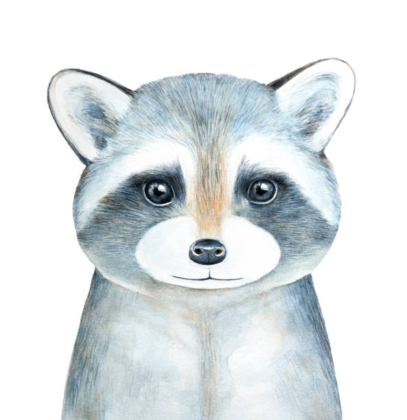 raccoon character watercolor portrait. - baby animals stock illustrations