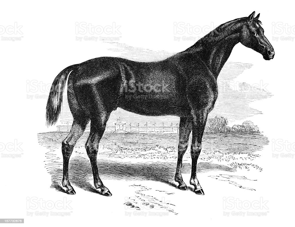 Race Horse Engraving vector art illustration