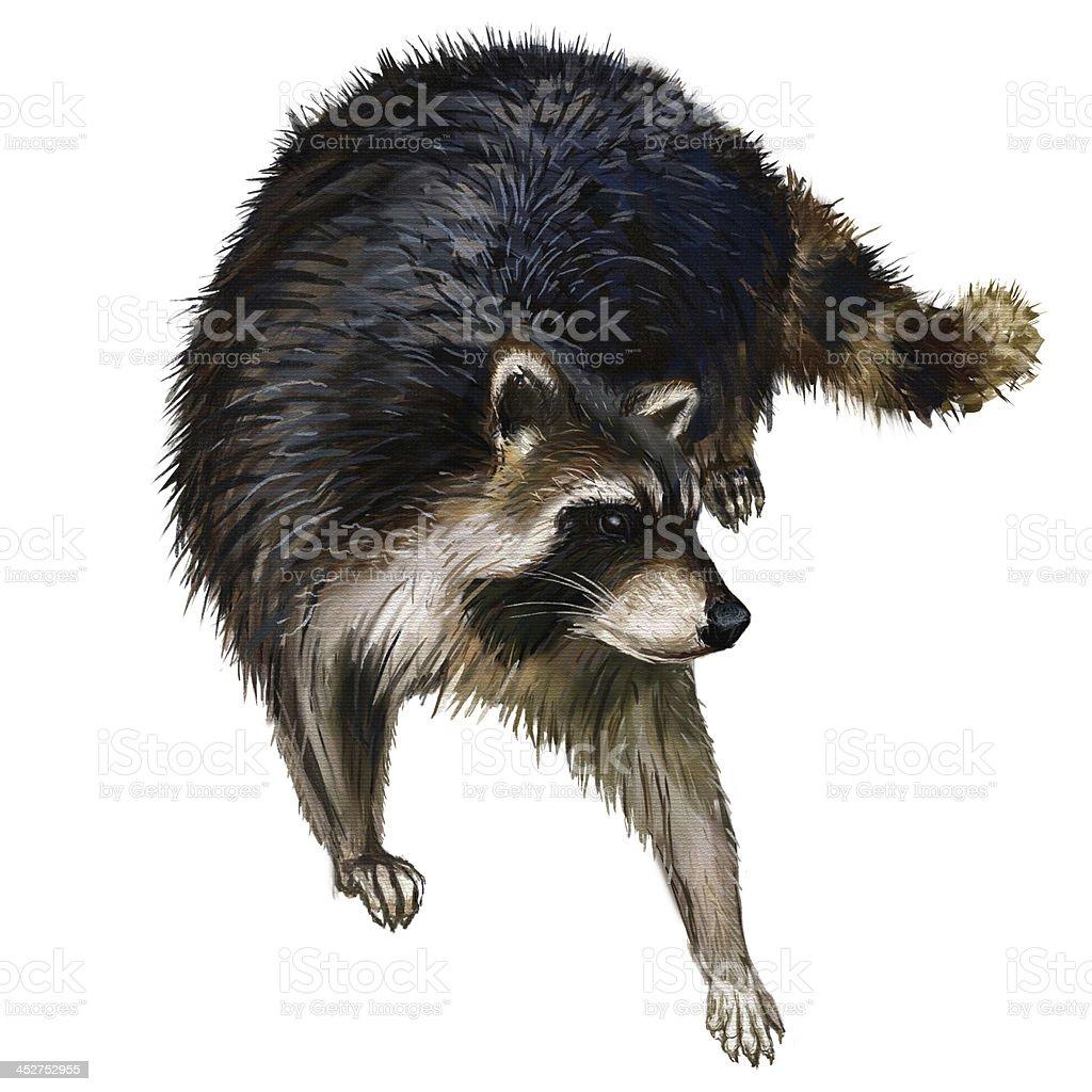 racoon pinting royalty-free stock vector art