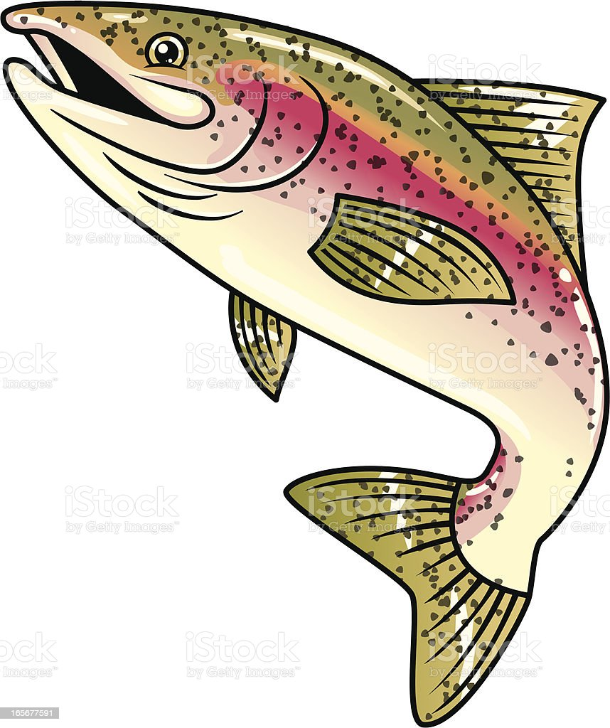 rainbow trout vector art illustration