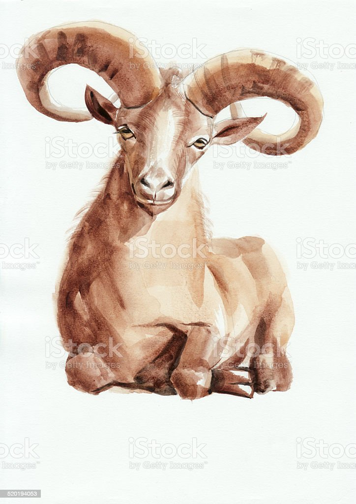 Ram watercolor painting vector art illustration