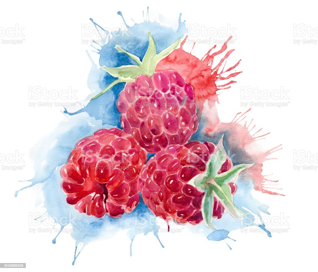 raspberries in watercolor splashes vector art illustration
