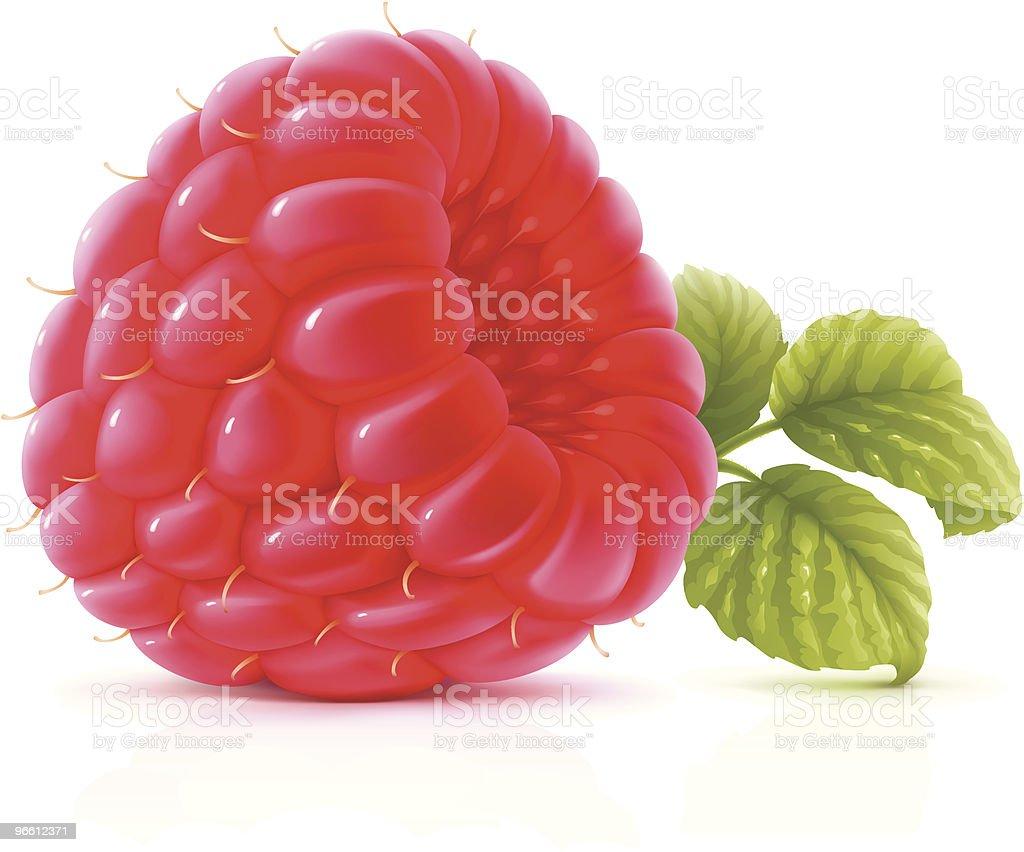 Raspberry vector art illustration