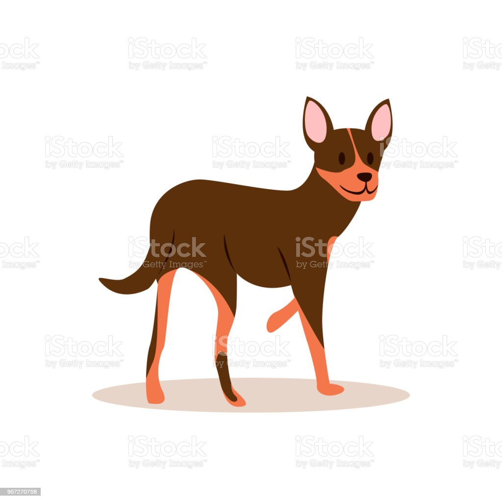 Raster image of a brown chihuahua that looks back vector art illustration