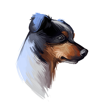 Ratonero Bodeguero Andaluz dog portrait isolated on white. Digital art illustration o for web, t-shirt print and puppy cover design. Perro Ratonero Andaluz, Andalusian Wine-Cellar Rat-Hunting Dog