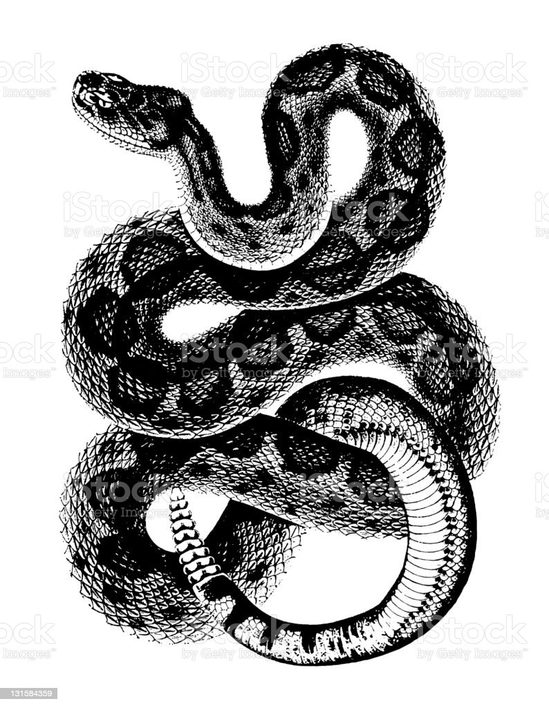 Rattlesnake vector art illustration