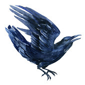 Raven watercolor illustration. Flying black raven isolated  on white background.
