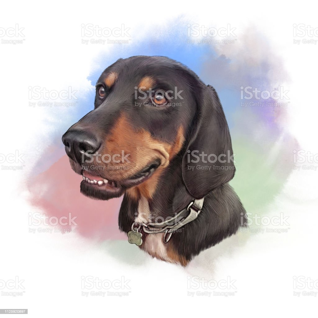 Realistic Portrait of a Hunting Dog vector art illustration