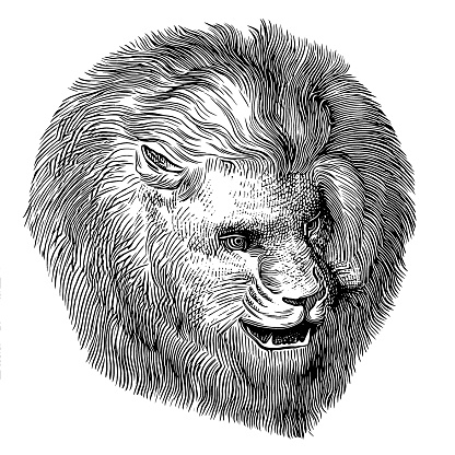 Realistic portrait of African Lion