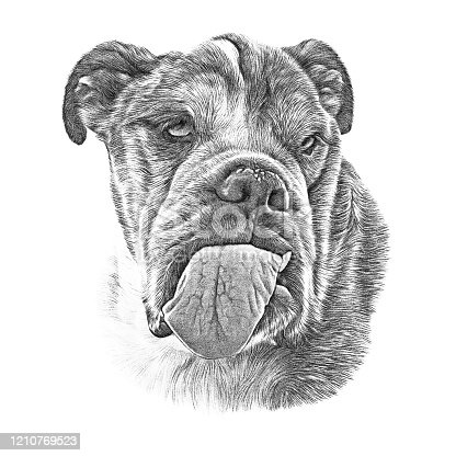 Realistic Portrait of Neapolitan Mastiff Dog