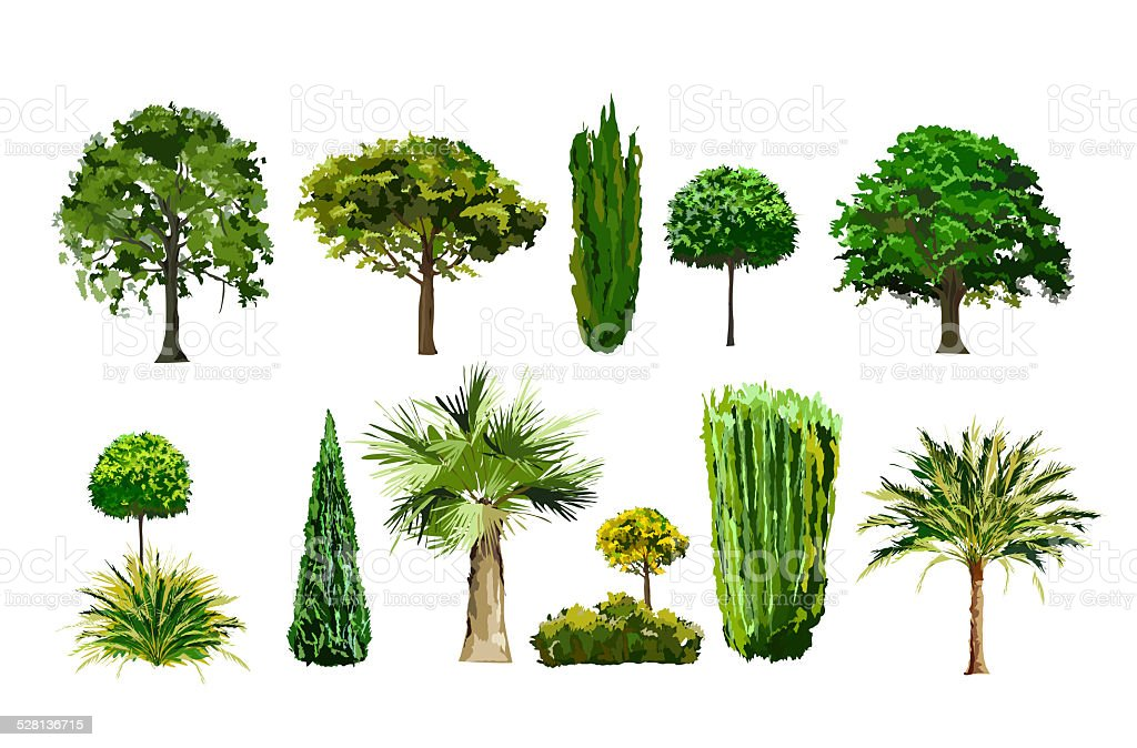 Realistic tree set vector art illustration