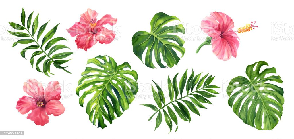 Realistic tropical botanical foliage plants. Set of tropical leaves and flowers: green palm neanta, monstera, hibiscus. Hand painted watercolor illustration isolated on white. royalty-free realistic tropical botanical foliage plants set of tropical leaves and flowers green palm neanta monstera hibiscus hand painted watercolor illustration isolated on white stock illustration - download image now