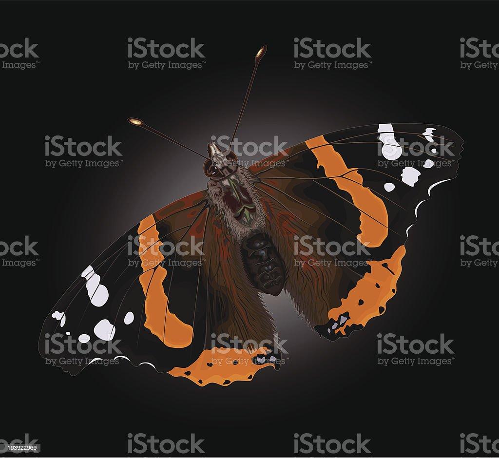 Red Admiral Butterfly – Vektorgrafik