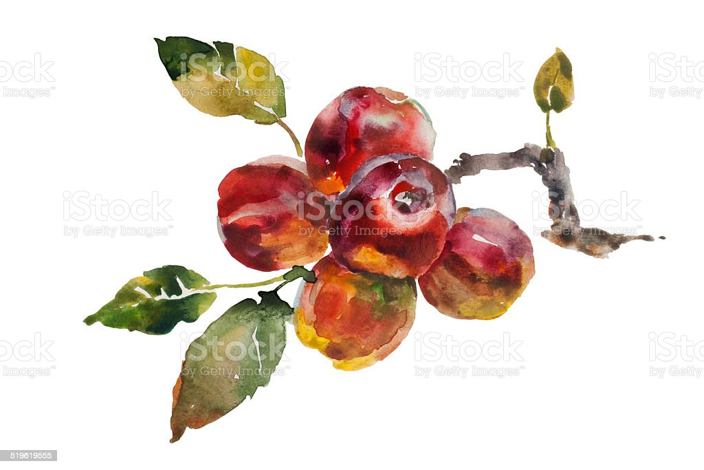 Red apples bunch on the tree twig vector art illustration