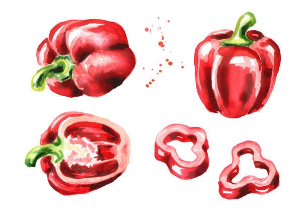 ilustrações de stock, clip art, desenhos animados e ícones de red bell pepper set. watercolor hand drawn illustration  isolated on white background - red bell pepper isolated