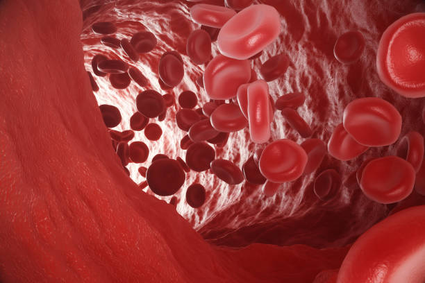 Red blood cells: responsible for oxygen carrying over, regulation pH blood, a food and protection of cages of an organism. 3d rendering vector art illustration