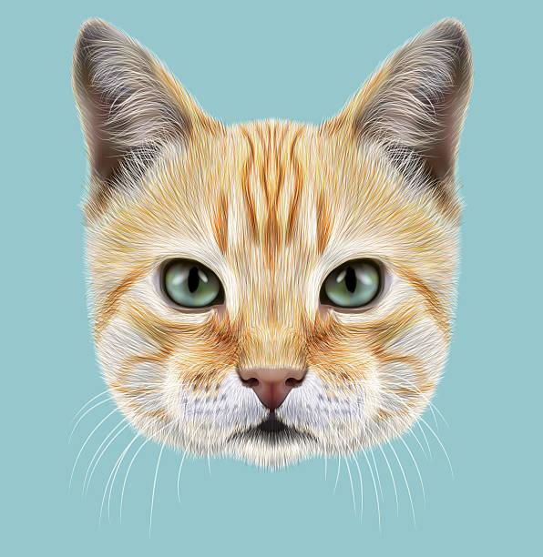 red cat. illustrated portrait - fur texture stock illustrations, clip art, cartoons, & icons