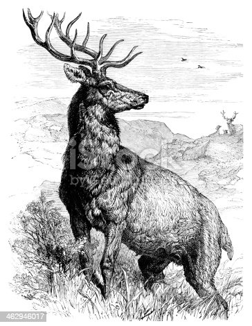 """A majestic red deer stag on a Scottish mountain, wary of another stag in the distance. From """"Glad Hours - The Little One's Own Treasury of Pictures and Stories"""" by Muriel Evelyn and illustrated by various artists. Published by Ward Lock & Co, London and New York, 1886."""