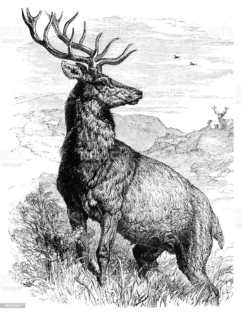 Red deer stag vector art illustration