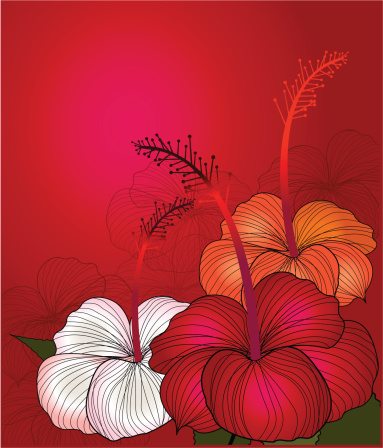 Red Hibiscus Stock Illustration - Download Image Now