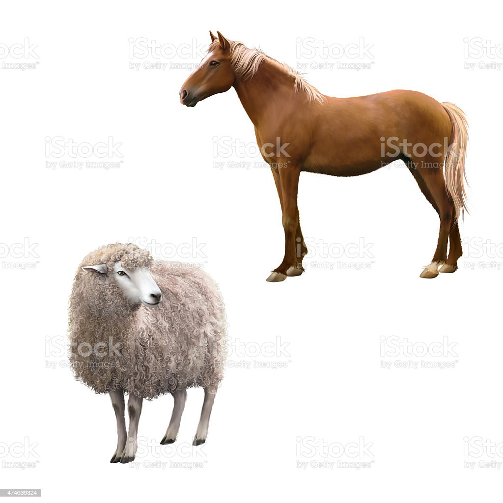 red horse and furry female sheep vector art illustration