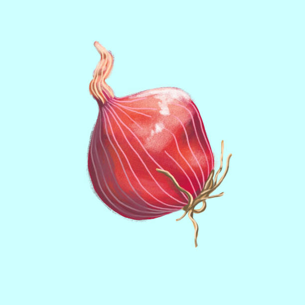 Royalty Free Red Onion Clip Art, Vector Images ...
