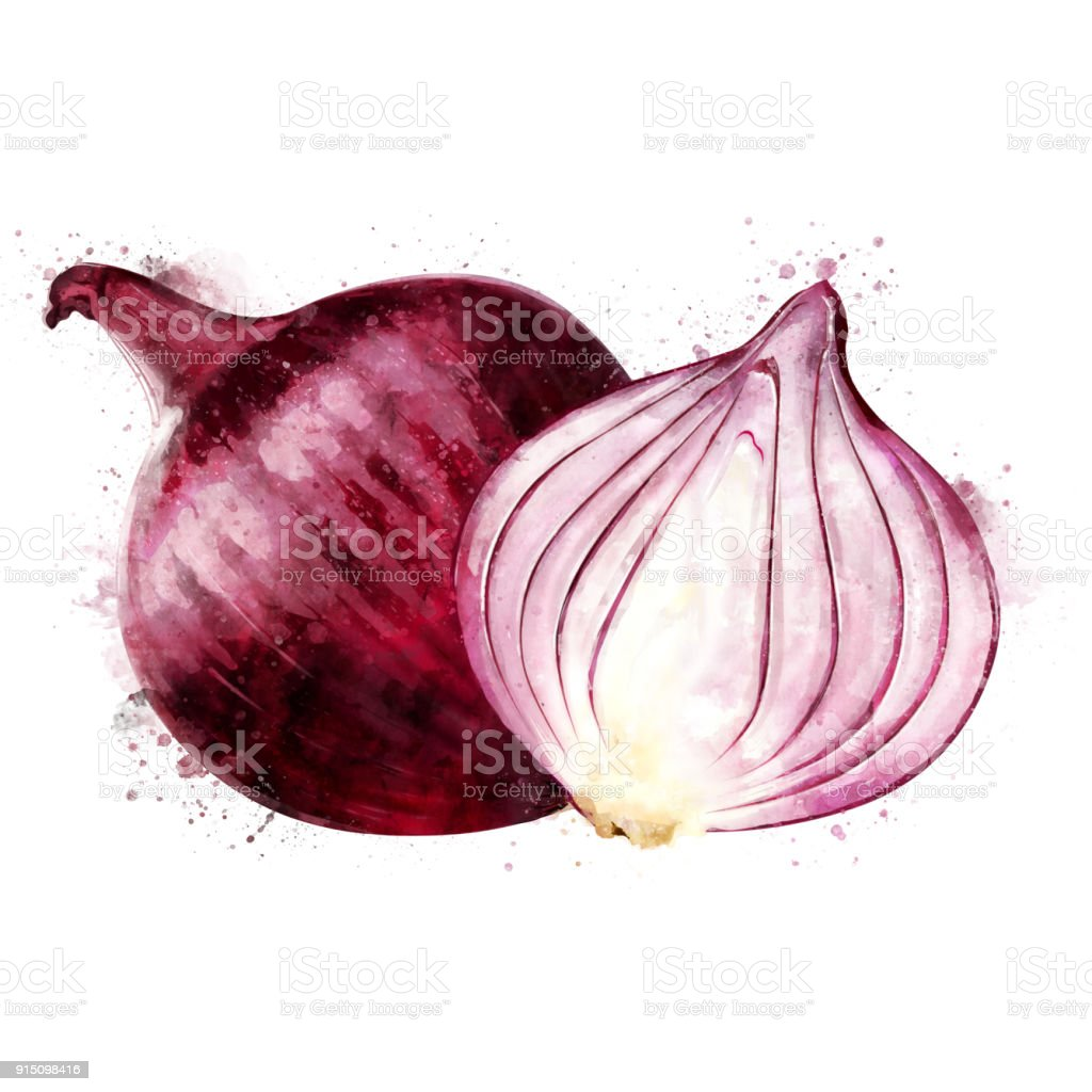 Red Onion On White Background Watercolor Illustration Stock
