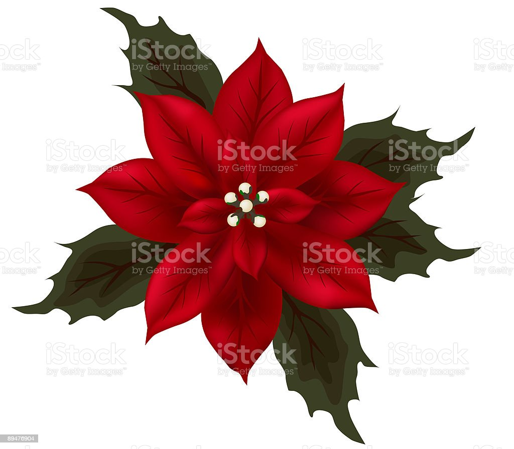 Red Poinsettia royalty-free stock vector art