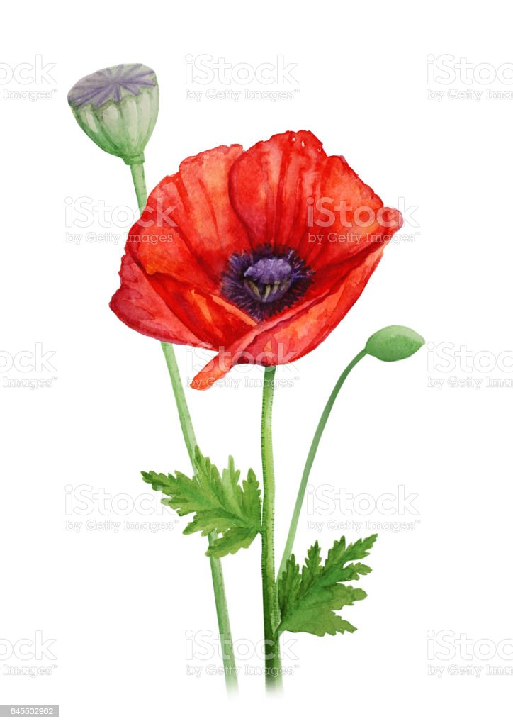 Red Poppy Flower On A Stalk