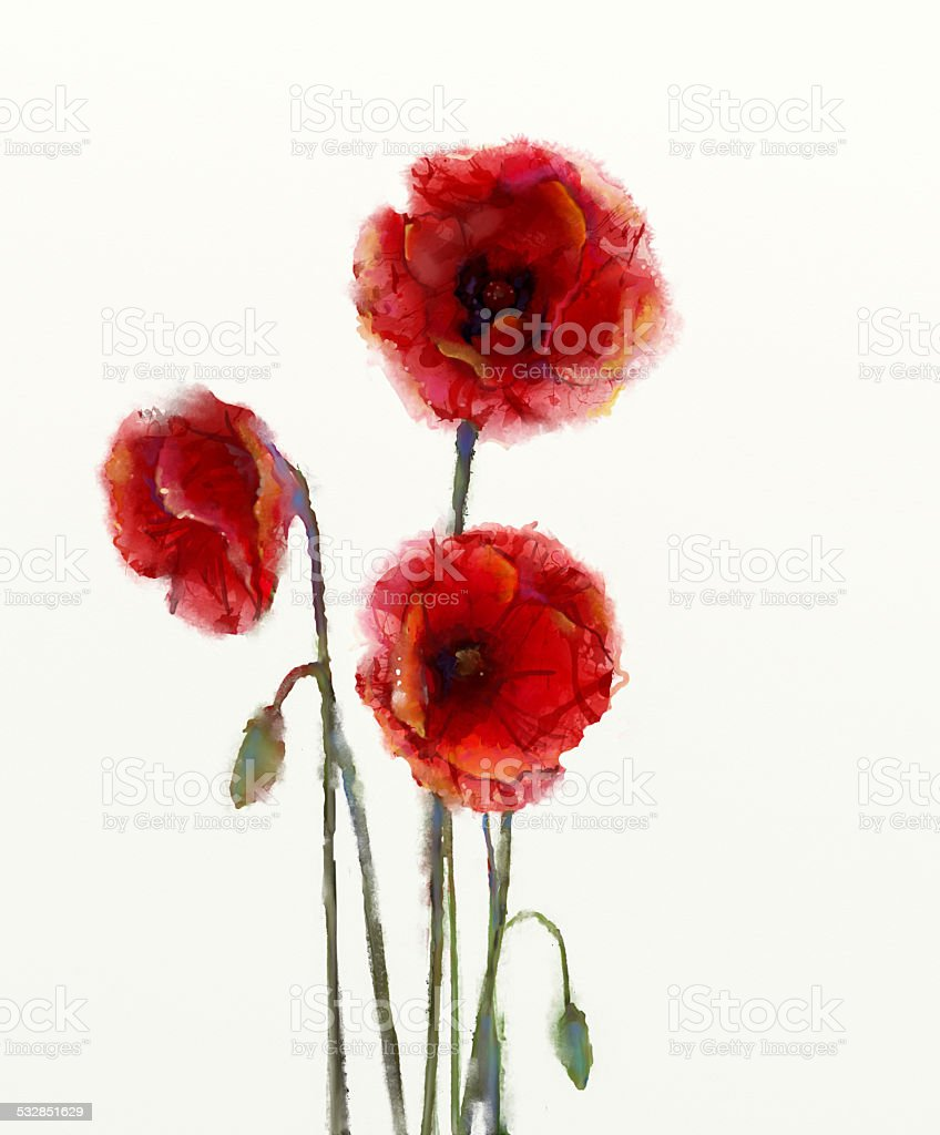 Red poppy flowers watercolor painting isolated on white backgrou vector art illustration