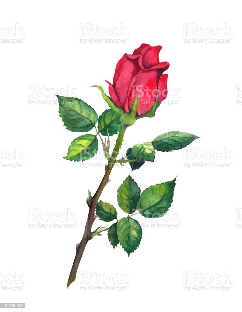 Ilustración de Rojo Capullo De Rosa Con Hojas Una Flor En El Tallo ...