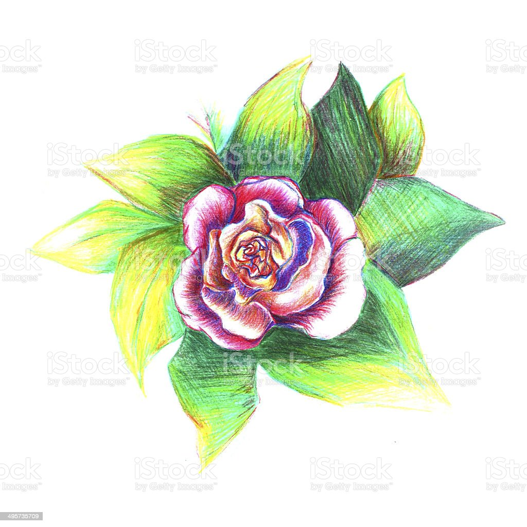 Rose Rouge Dessin Cliparts Vectoriels Et Plus D Images De Amour