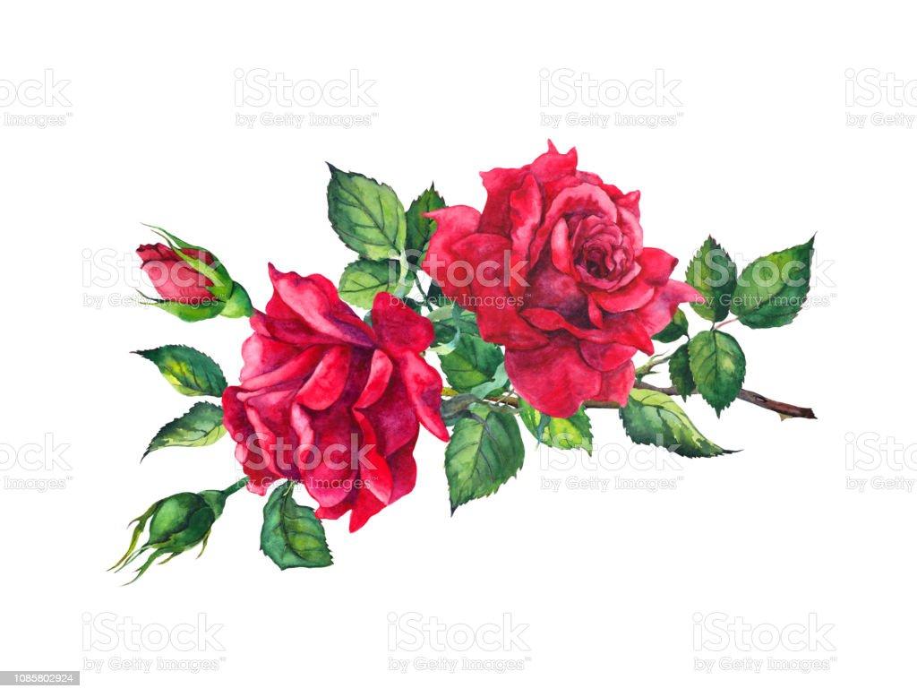Vetores De Ramo De Rosas Vermelhas Aquarela Desenho Desenho De Flor E Mais Imagens De Amor Istock