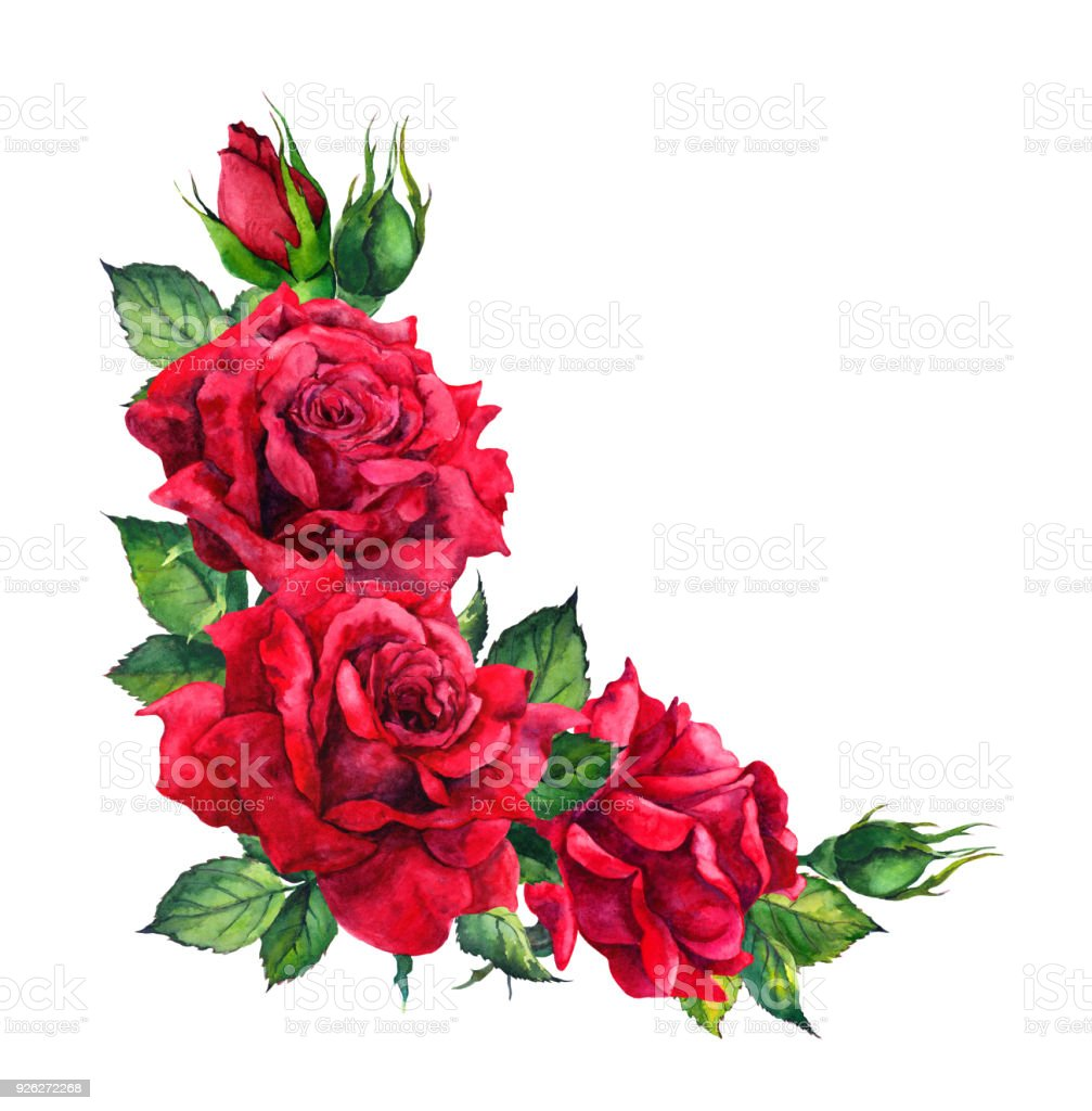 red roses corner floral composition watercolor for wedding card stock illustration download image now istock red roses corner floral composition watercolor for wedding card stock illustration download image now istock