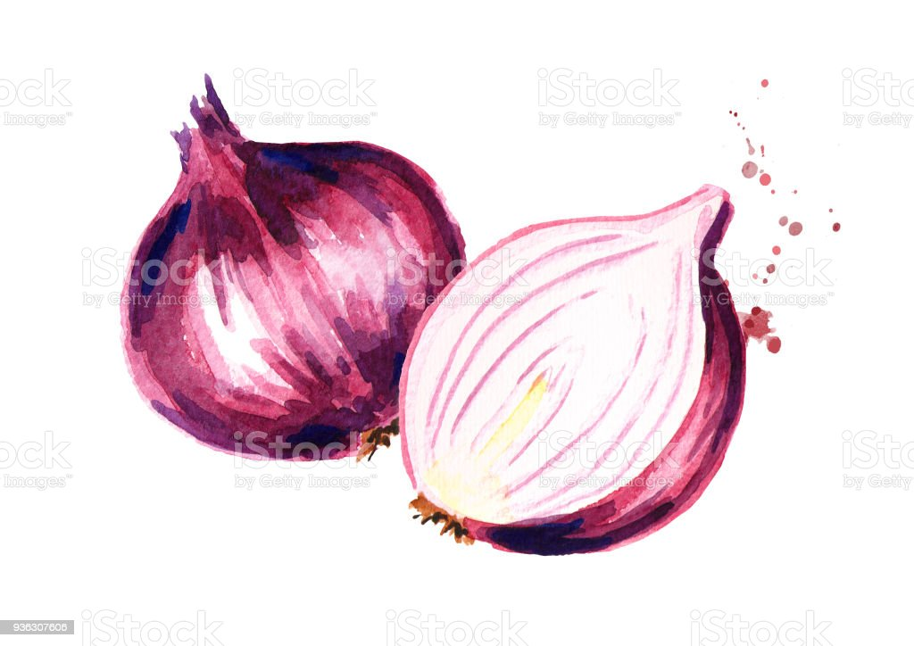 Red Sliced Onion Watercolor Hand Drawn Illustration ...