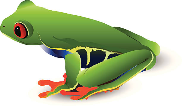 Red-eyed tree frog vector art illustration