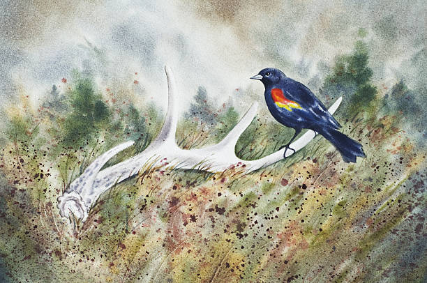Red-winged Blackbird on a Deer Antler vector art illustration