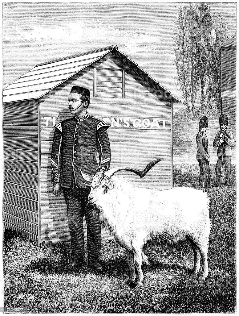 Regimental goat mascot standing to attention (Victorian illustration) royalty-free stock vector art