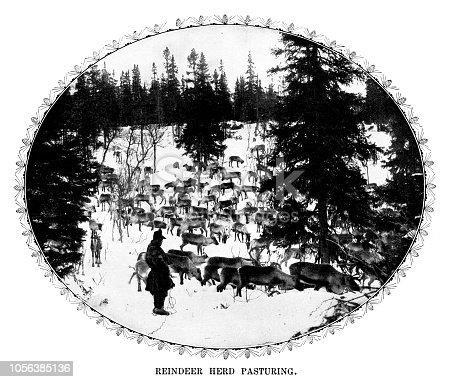 Reindeer herd pasturing - Scanned 1899 Engraving