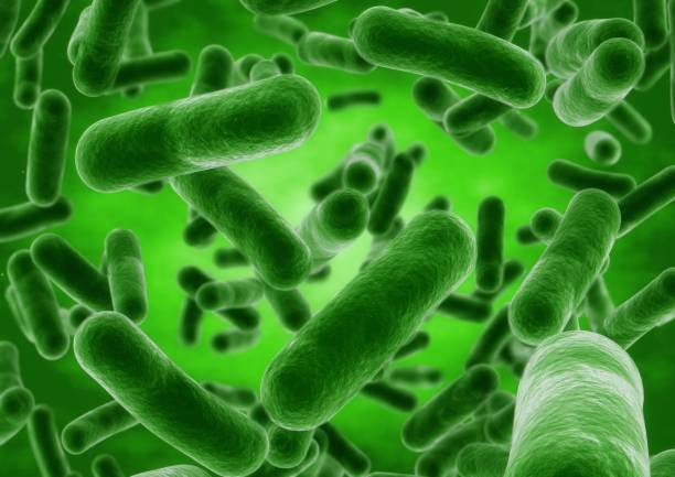 3D rendering Bacteria closeup 3D rendering Bacteria closeup. bacillus subtilis stock illustrations